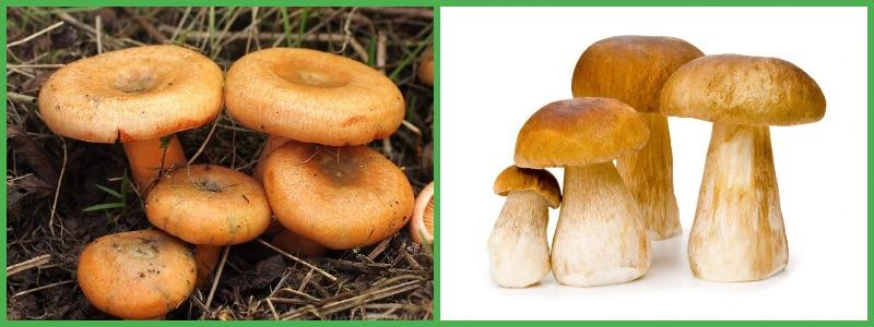 Можно ли есть грибы на диете