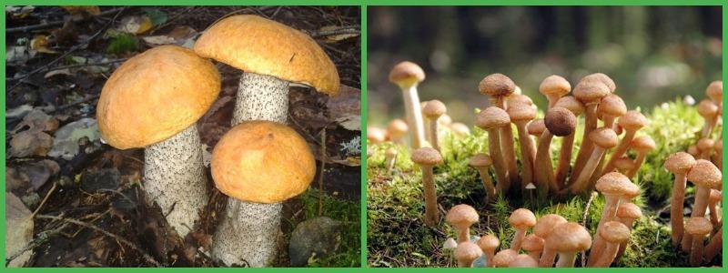 Можно ли есть грибы во время диеты?