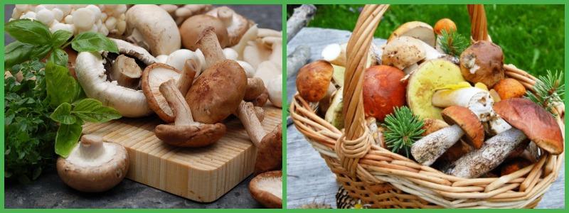 Разрешённые виды грибов