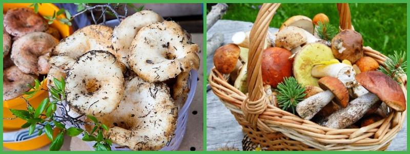 Польза включения грибов в рацион здорового питания