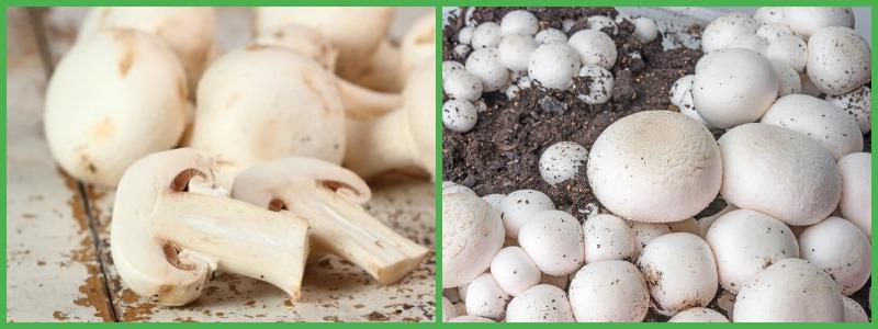 Вред грибов на диете